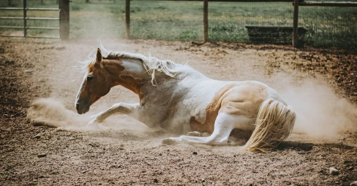 Managing Seasonal Allergies in Horses